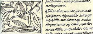 320px-Vanilla_florentine_codex